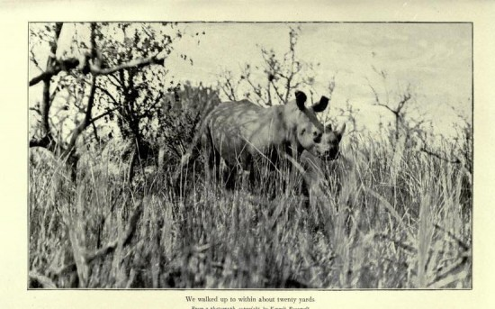 Roosevelt, white rhino