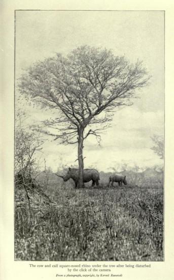 Roosevelt, disturbing white rhino
