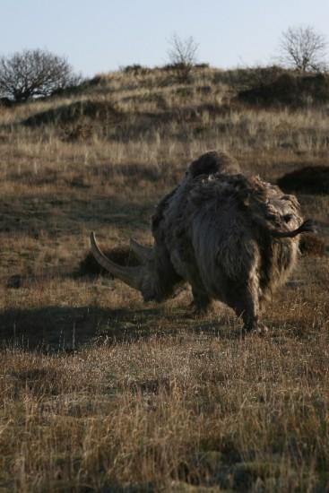 Woolly rhino #09