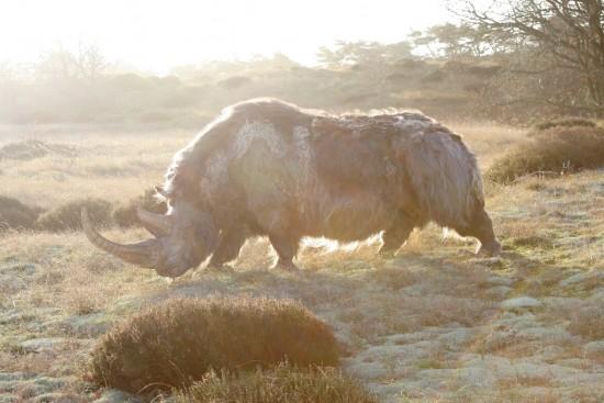 Woolly rhino #11