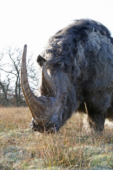 Woolly rhino #12