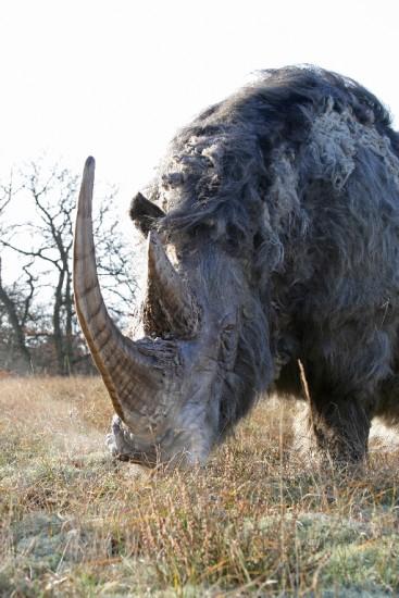 Woolly rhino #08