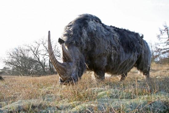 RRC: Woolly rhino #07 Rhino 07