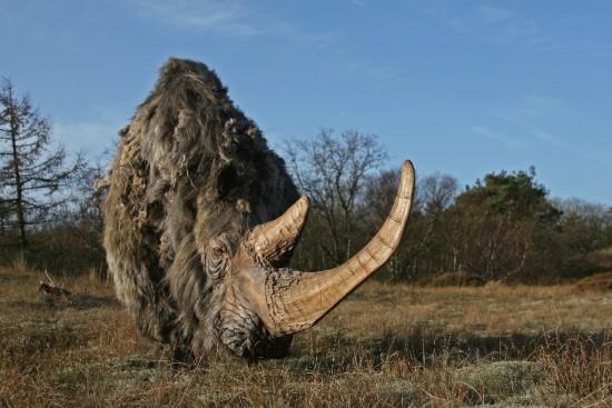 Woolly rhino #05