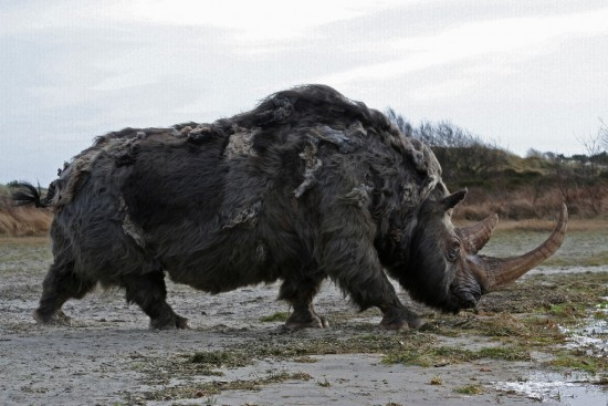Woolly rhino #02