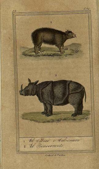 Buffon 1833