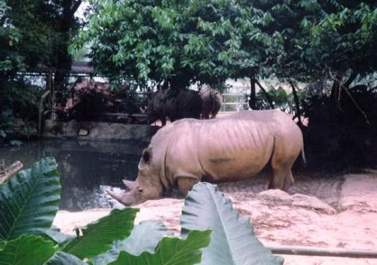 Indonesia 1997