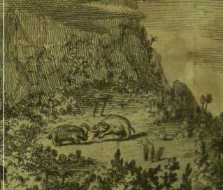 Vogel 1716 detail