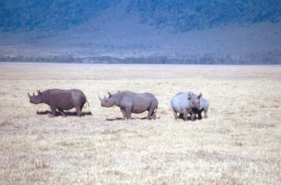 Ngorongoro 2000