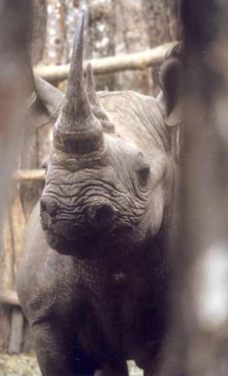 Matobo 2000