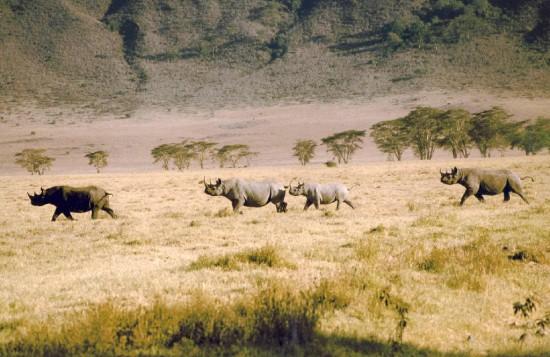 Tanzania 2000