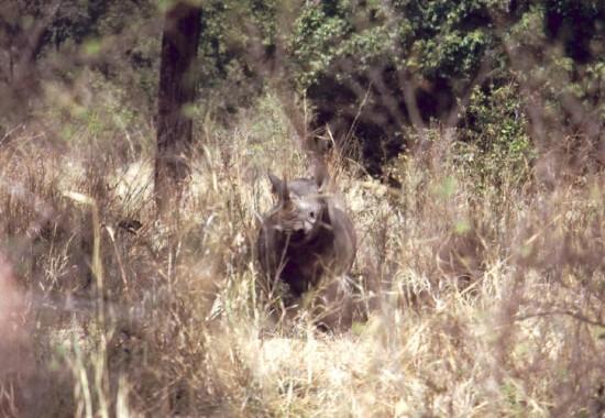 Zambia 2000