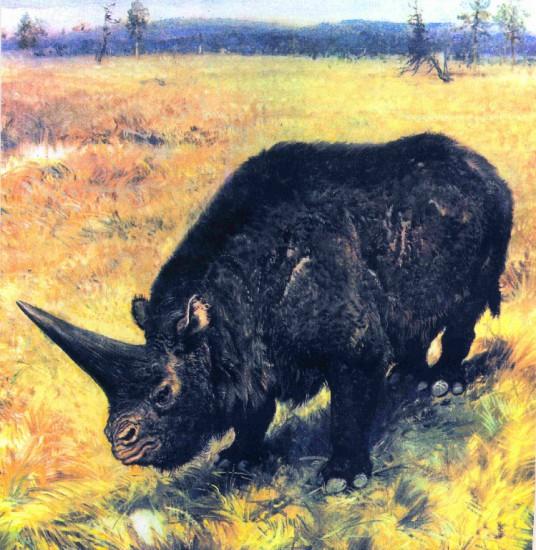 RRC: Elasmotherium