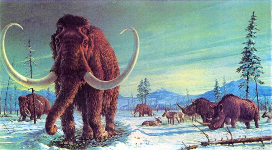 Woolly rhino and mammoth