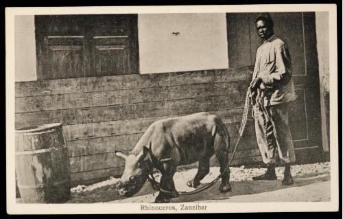 Rhino in Zanzibar
