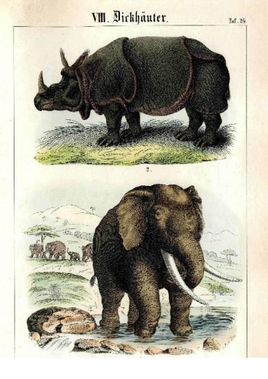 Krauss 1851 plate