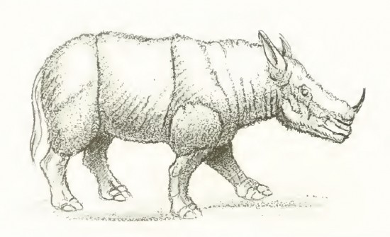 Reconstruction attempt of Lartetotherium sansaniense