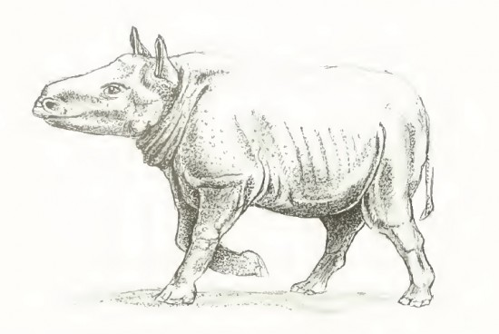 Reconstruction attempt of Plesiaceratherium fahlbuschi