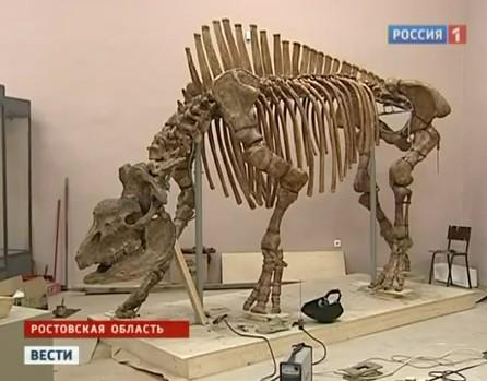 RRC: Elasmotherium caucasicum Borissyak skeleton