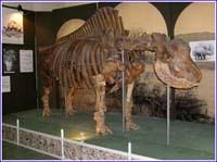 Elasmotherium sibiricum (Fischer) skeleton