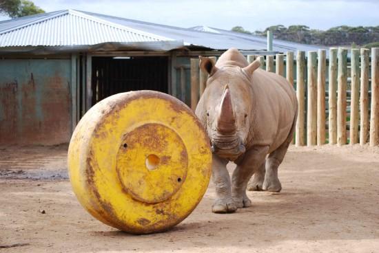 Monarto Zoo enrichment