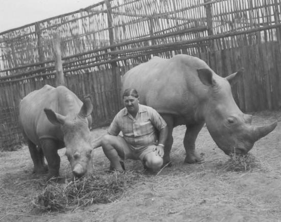 Carr Hartley white rhino