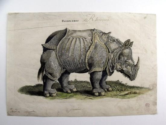 Jonstonius' rhino 1657