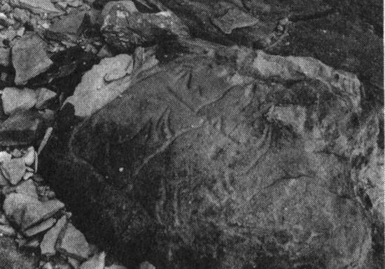 Two rhinoceroses engraved on the rock at El Macnusa (Acacus, Fezzan, Libya)