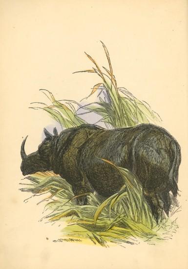 Lee 1853