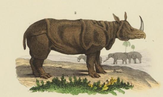 Drapiez 1855