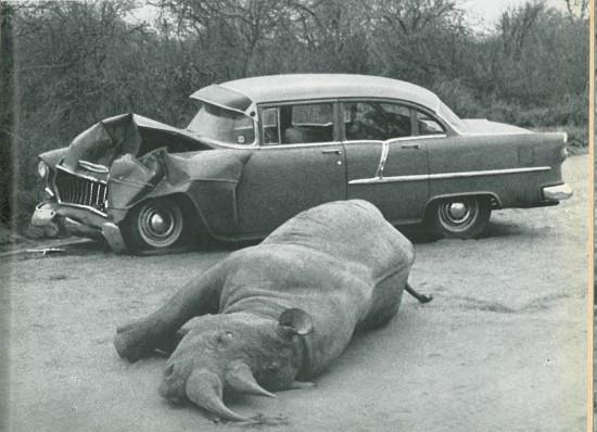 Serengeti 1960