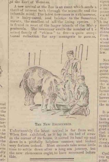 London 1898 Sumatran