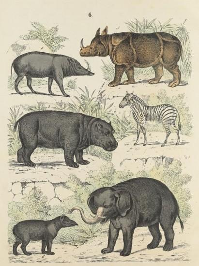 Naturgeschichte der Saugethiere 1840