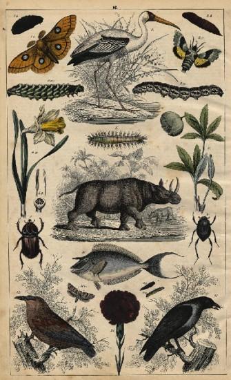 Neuestes Bilderbuch 1848