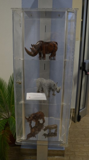 Rhinoceroses in the S. Daniele Po Palaeontological Museum (Italy)