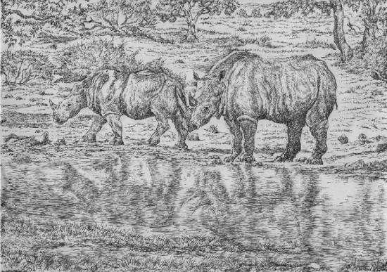 Ceratotherium neumayri (Osborn) and its habitat