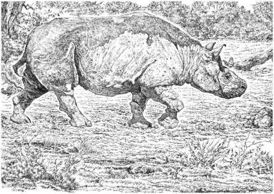 Brachypotherium lewisi Hooijer & Patterson 1972 and its habitat