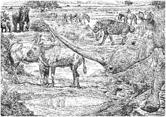 Ningxiatherium euryrhinus Deng 2008 and its habitat