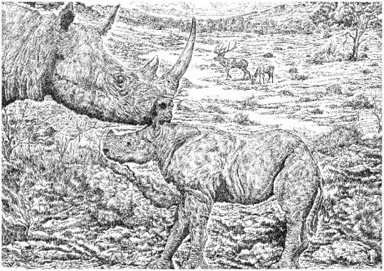 Dicerorhinus hemitoechus (Falconer, 1868) with its calf