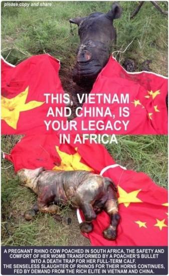 Save the rhinoceroses