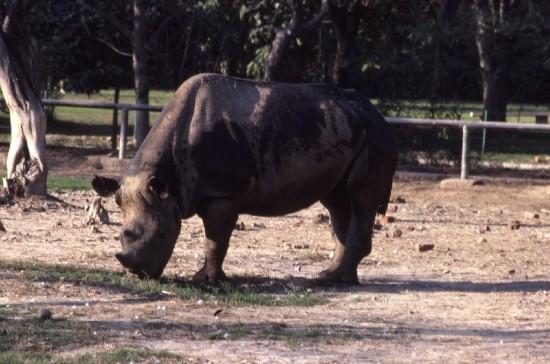 Delhi Zoo 1987