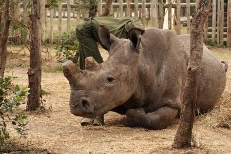 Nile rhino Fatu