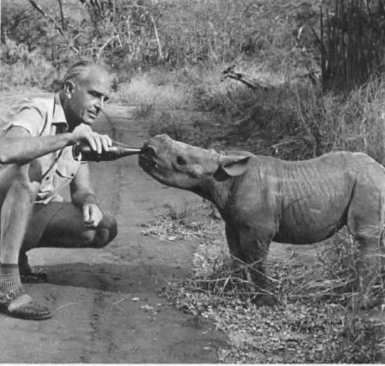 Grzimek with rhino