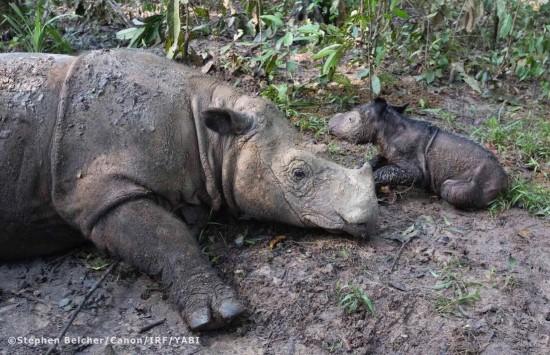 Sumatra new birth to Ratu