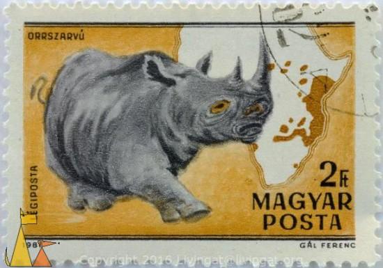 Ceratotherium simum by Magyar posta