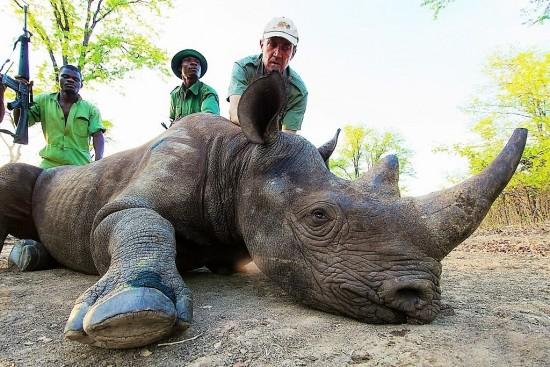 Rhino darting in Malawi