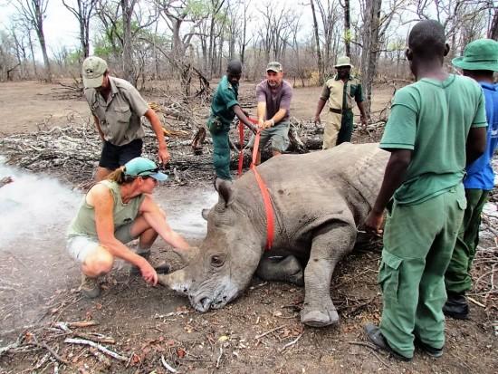 Rhino transmitter