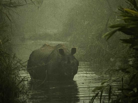 Chitwan 2017 (3)