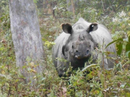 Chitwan 2017 (8)
