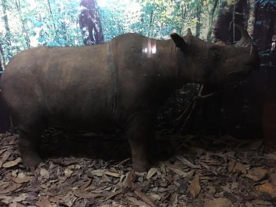 Linbar rhinoceros